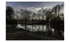 Long Island (PhotoRapper (Michael)) Tags: sigma dp1 quattro sigmadp1quattro foveon digital color dng puddle winter eastnorthport ny newyork longisland
