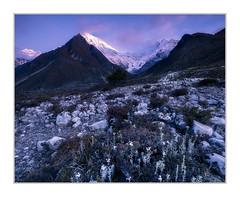 Langtang Lirung at Sunrise. (Sean D H Lewis) Tags: nepal langtang himalayas mountains sunrise