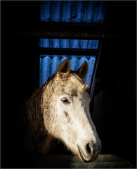 Yerba (Fitzpaine) Tags: horse whitehorse stables skylight equestrian equine horsehead sunshine december mud muddy mucky dirty xh1 fujifilmxh1 fujixh1 davidjdalley staplefitzpaine taunton tauntondeane westcountry somerset farm light goodlight dark darkness lightanddark uk england rural