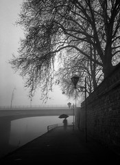 The man with the silhouette (Fan.D & Dav.C Photgraphy) Tags: tranquil scene outdoors tree nature sky no people day black and white bare silhouette landscape beauty in branch water scenics street silence streetphotography streeturbainphotography streetphoto streetbnw shadow dark fog blackandwhitestreetphotography blackandwhitephotography bwphotography