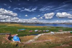 Totora (marko.erman) Tags: peru titicaca lake southamerica latinamerica highaltitude travel outside outdoor shore reeds totora vegetal water horizon sunny sun beautiful sony wideangle clouds