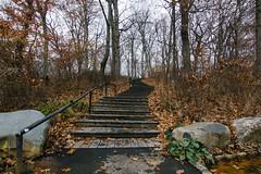 ☝️ A s c e n d ☝️ (0sire) Tags: fall autumn stairway trees park overcast cloudy oaklandlakepark queens nyc newyorkcity