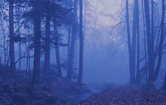 Autumn morning in blue (romizaj) Tags: blue color wallpaper landscape nature environment ecology tree trees wood forest trunk fog foggy deep fall autumn background canonm100 m100
