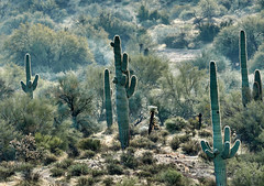 12092019000036976 (Verde River) Tags: landscape landscapes nature cactus bird birds