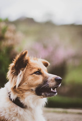 090318Ura14 (ane.eizagirre91) Tags: ura animales dogs perros txakurrak