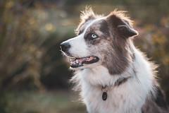 071018Xana04 (ane.eizagirre91) Tags: imprimibles xana animales dogs luz perros subjectlight txakurrak