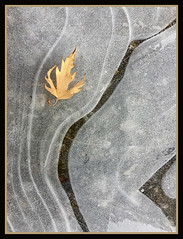 Leaf on Ice (Goose Spittin' Image Photography) Tags: ice cracks stress lines frozen water puddle okanagan bc leaf