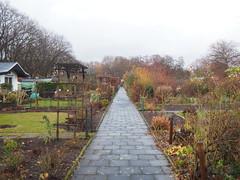 Der Garten am 09. Dezember 2019 (peterwoelwer) Tags: olympusomdem1 mzuiko17mmf18 microfourthirds mft garten garden