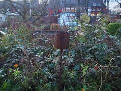 Die Brombeerhecke (peterwoelwer) Tags: olympusomdem1 mzuiko17mmf18 microfourthirds mft garten garden