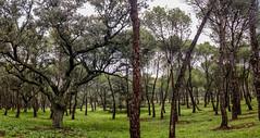 Casa de Campo (Carlos SGP) Tags: madrid españa es paisaje parque casadecampo nature naturaleza parajenatural park pino landscape otoño autumn xiaomi9pro xiaomi