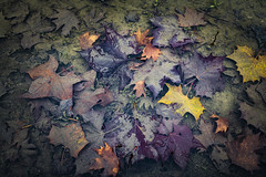 Winter Moods (panos_adgr) Tags: winter moods leaves colours nature water moisture textures nikon d850 travel photography