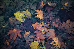Winter Mood (panos_adgr) Tags: winter moods leaves colours nature water moisture textures nikon d850 travel photography