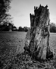 Stumped at Lacock (Leya Walker) Tags: stump landscape blackandwhite holes abbey