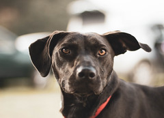 230717LaArena-charla07 (ane.eizagirre91) Tags: animales dogs perros txakurrak