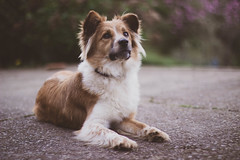 090318Ura21 (ane.eizagirre91) Tags: imprimibles ura animales dogs perros txakurrak