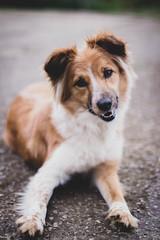 090318Ura09 (ane.eizagirre91) Tags: ura animales dogs perros txakurrak