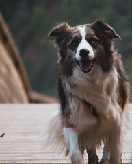 070317Artedo04 (ane.eizagirre91) Tags: imprimibles xana animales dogs gudog perros txakurrak
