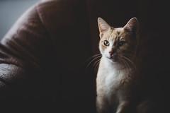050118Trotsky03 (ane.eizagirre91) Tags: imprimibles trotsky animales cats gatos katuak