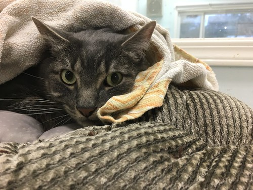 Gissy - 6 year old neutered male