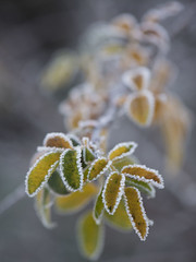 Coup de froid -**--+ (Titole) Tags: frost leaves titole nicolefaton shallowdof storybookwinner thechallengefactory 15challengeswinner