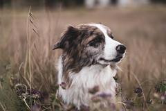 300417Bayas-Xana03 (ane.eizagirre91) Tags: imprimibles xana animales dogs perros txakurrak