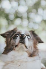 240517LaArena-Xana03 (ane.eizagirre91) Tags: imprimibles xana animales bokeh dogs luz perros subjectlight txakurrak