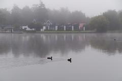 Patrol in the fog (Steenjep) Tags: sø lake landskab landscape sky cloud himmel fugl bird duck morgen morning fog tåge dis reflex refleks sunds sundssø