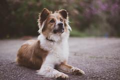 090318Ura22 (ane.eizagirre91) Tags: ura animales dogs perros txakurrak