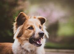 090318Ura13 (ane.eizagirre91) Tags: ura animales dogs gudog perros txakurrak