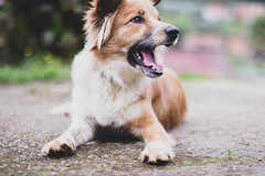090318Ura11 (ane.eizagirre91) Tags: imprimibles ura animales dogs perros txakurrak