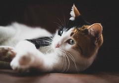 050118Mili02 (ane.eizagirre91) Tags: imprimibles mili animales cats gatos katuak