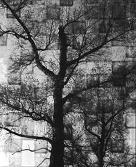 (von8itchfisk) Tags: film filmisnotdead ishootfilm mediumformat 120film selfdeveloped blackandwhite tree nature noedit incamera analog analogphotography mamiya superpress23 vonbitchfisk washi