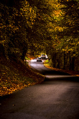 """driving down the winding autumn road. Near Honfleur, Calvados, Normandie (Normandy), France. (grumpybaldprof) Tags: honfleur calvados normandie normandy france road car winding autumn fall autumncolours fallcolours trees corners lights impressionist stylistic style contrast shadow bright darkcolour colours colourful landscape scenery vista """"canon70d"""" """"tamronsp90mmf28dimacro11vcusd"""" sumptuous rich"""