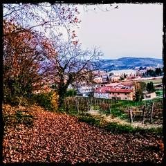 Senti il rumore delle foglie secche ? 🍁🍂🍃 (color raimbow) Tags: goldenleaves leavescarpet trees hill landscape autumn autumnview italy