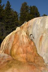 Orange Spring Mound 7 (Amaury Laporte) Tags: geothermal geothermalfeatures mammoth mammothhotsprings nationalpark nature northamerica usa unitedstates wyoming yellowstone
