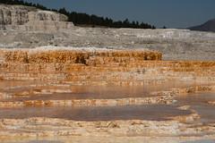 Mammoth Hot Spring Terraces 2 (Amaury Laporte) Tags: geothermal geothermalfeatures mammoth mammothhotsprings nationalpark nature northamerica usa unitedstates wyoming yellowstone