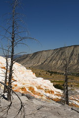 Dead Trees and Canary Spring Terraces 4 (Amaury Laporte) Tags: geothermal geothermalfeatures mammoth mammothhotsprings nationalpark nature northamerica usa unitedstates wyoming yellowstone