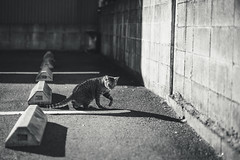 猫 (fumi*23) Tags: ilce7rm3 sony 58mm cosina voigtlander nokton voigtländernokton58mmf14slⅱ a7r3 manualfocus animal alley parking bnw bw blackandwhite monochrome feline fmount cat chat gato katze neko ねこ 猫 ソニー コシナ ノクトン フォクトレンダー モノクロ