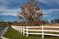 Picket fence (*Millie*) Tags: grass green picketfence fence white wood tree sky clouds blue autumn fall curve road roadsigns canoneos5dmarkiii ef24105mmf4lisusm milliecruz hff