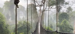 Rain and rising mist in the rainforest! (Nina_Ali) Tags: ghana ropebridge rainforest rain mist trees landscape nature beauty africa weather atmospheric fog wideangle jungle pov perspective kakumnationalpark ninaali