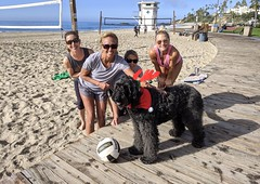 Big Black Benni on the Boardwalk with the Beach VolleyBallers on a Beautiful day (Bennilover) Tags: christmas collars bandana red white antlers dog dogs labradoodle beach volleyball friendly fun group thismaynotbeoldsanjuanbut itbeginswiththeletterb lagunabeach sand surf ocean pacific california games beachvolleyball women athletes benni