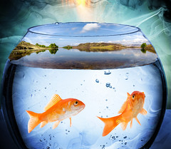 Two Worlds (Rafael Chacon Photography) Tags: business danger trap risk shark concept goldfish jump fail dangerous fish courage bowl adversity misfortune situation funny brave metaphor fishbowl accident conceptual water challenge aquarium animal tank italy