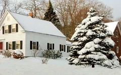 Winter in New England (Icanpaint1) Tags: winter winterwonderland winterlandscape snow snowcoveredtree landscapes wjtphotos flickr newhampshire newengland newenglandwinter
