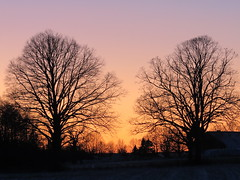 Sun has set (Anna's 50) Tags: canong1x trees