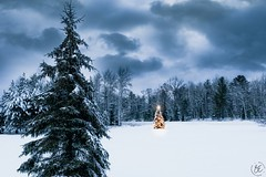 ~Christmas is not a story of hope. It is hope. (Fire Fighter's Wife) Tags: white whitechristmas christmas christmastree christmaslights bokeh bokehlicious winter winterwonderland merrychristmas happyholidays tree trees pine pinetree pineneedles fujifilm fujinonxf1855mmf284rlmois fujifilmxt20 1855mmf2840 25daysofchristmas snow snowy snowfall snowflakes light stormy storm nature landscape