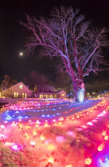 MCE_5394thnightlights1jsm (JayEssEmm) Tags: tower hill botanic garden boylston massachusetts night lights holiday christmas winter