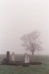 Quiet times (taraka26) Tags: film 35mm canonftb fog cemetery graveyard