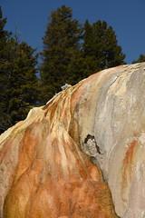Orange Spring Mound 8 (Amaury Laporte) Tags: geothermal geothermalfeatures mammoth mammothhotsprings nationalpark nature northamerica usa unitedstates wyoming yellowstone