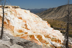 Dead Trees and Canary Spring Terraces 6 (Amaury Laporte) Tags: geothermal geothermalfeatures mammoth mammothhotsprings nationalpark nature northamerica usa unitedstates wyoming yellowstone
