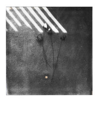 Lines of Roses (H o l l y.) Tags: polaroid 600 analog instant film cage body creepy weird dark flash night plants retro indie vintage square roses shadow bw black white no color